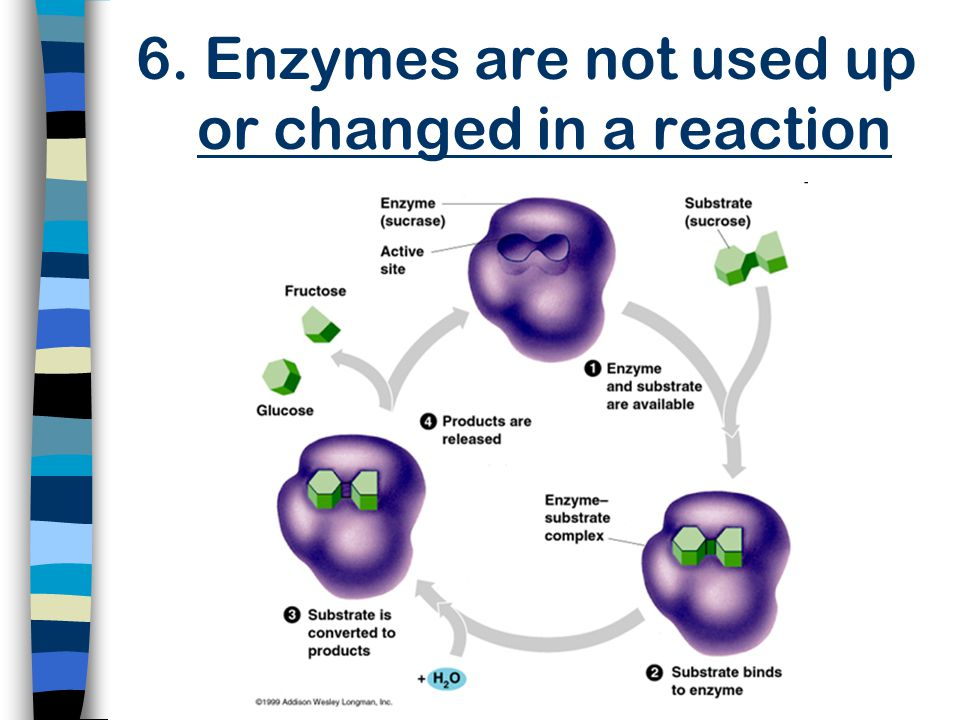 6. Enzymes are not used up or changed in a reaction