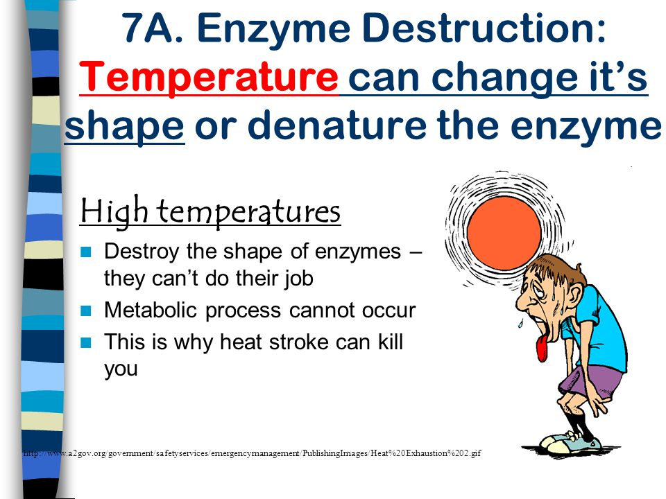 7A. Enzyme Destruction: Temperature can change it's shape or denature the enzyme