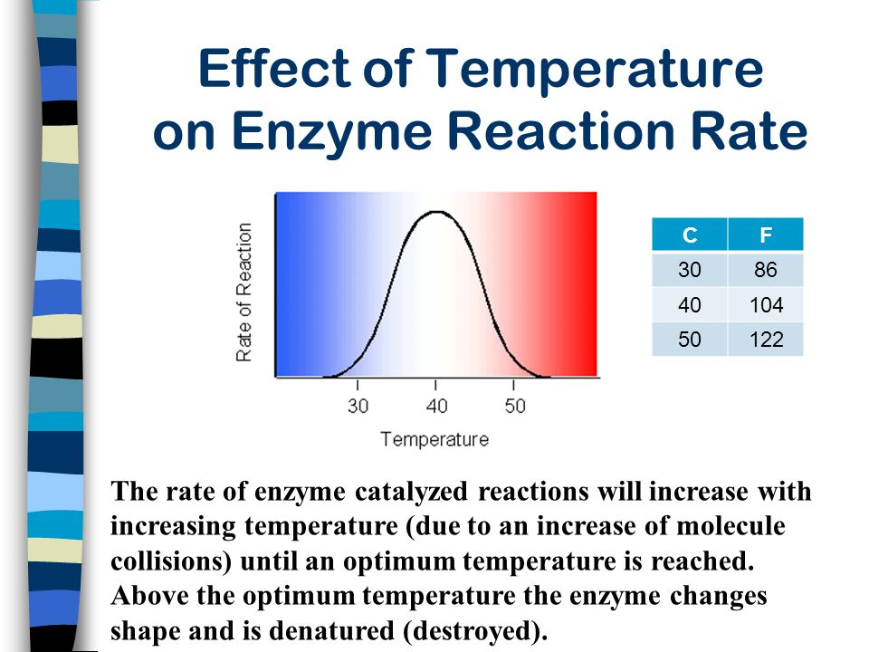 Effect of Temperature on Enzyme Reaction Rate