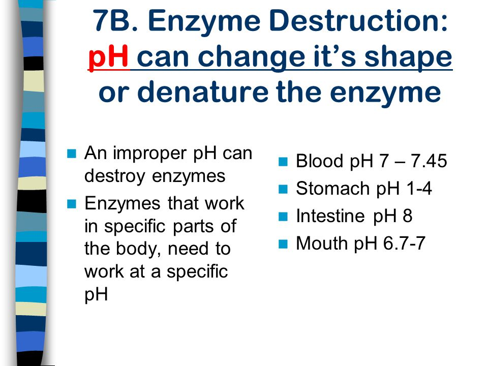 7B. Enzyme Destruction: pH can change it's shape or denature the enzyme