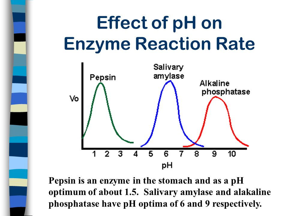 Effect of pH on Enzyme Reaction Rate