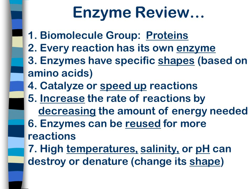 Enzyme Review…