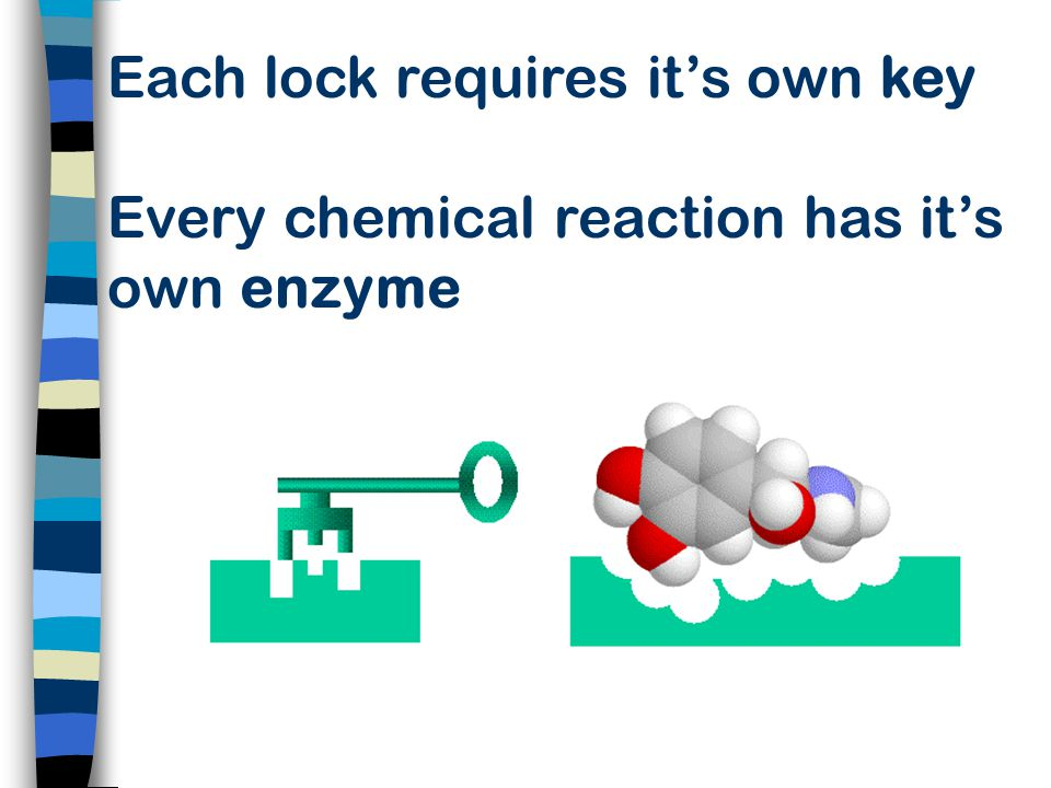 Each lock requires it's own key Every chemical reaction has it's own enzyme