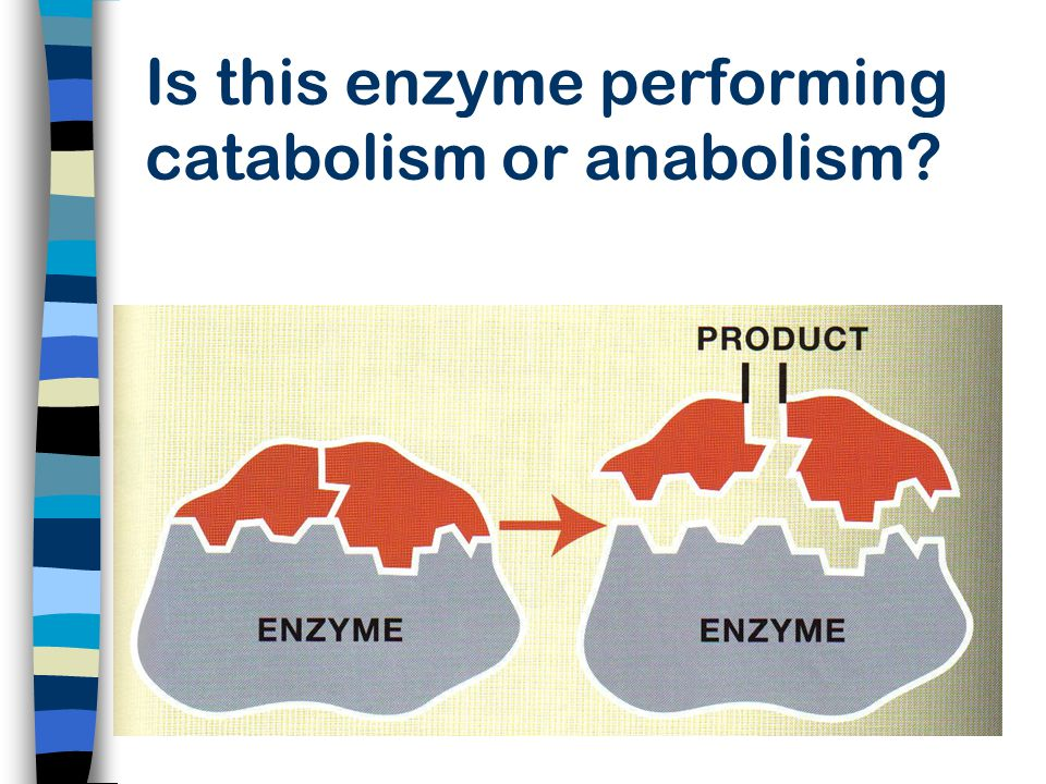 Is this enzyme performing catabolism or anabolism