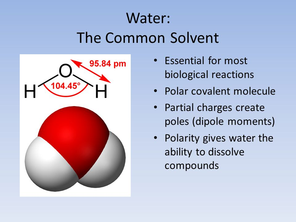 Water: The Common Solvent