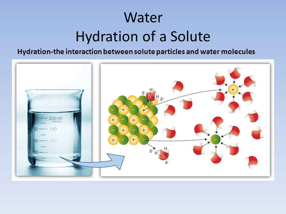 Water Hydration of a Solute