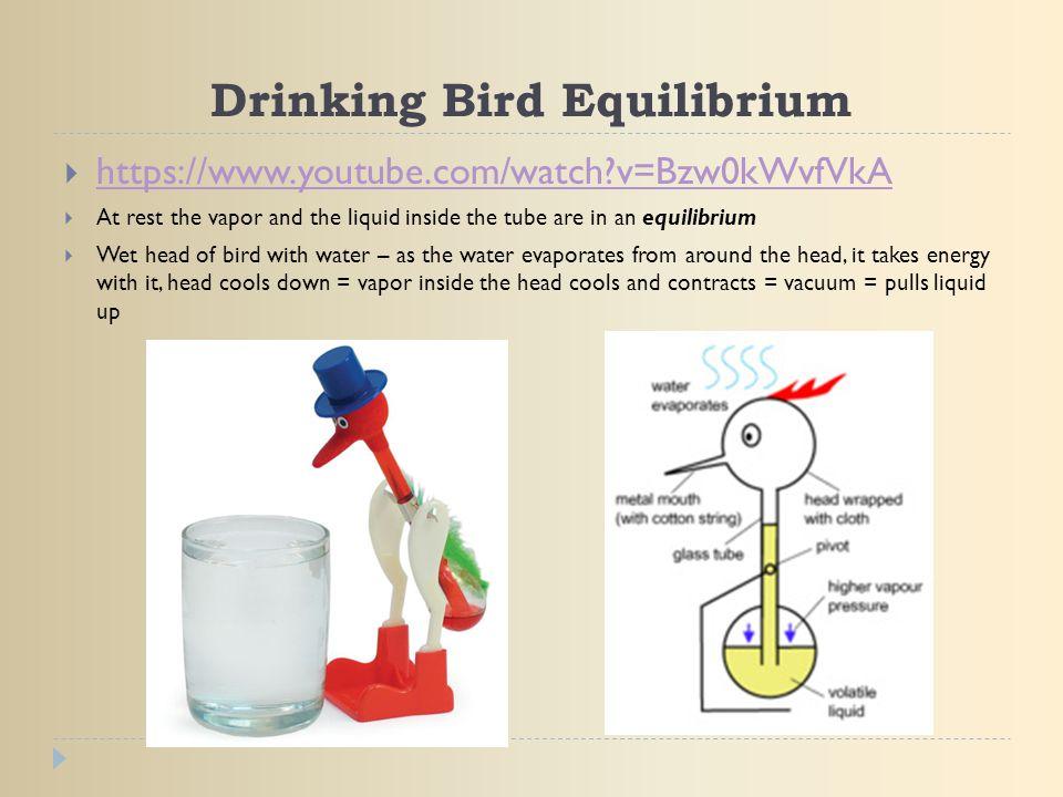 Drinking Bird Equilibrium