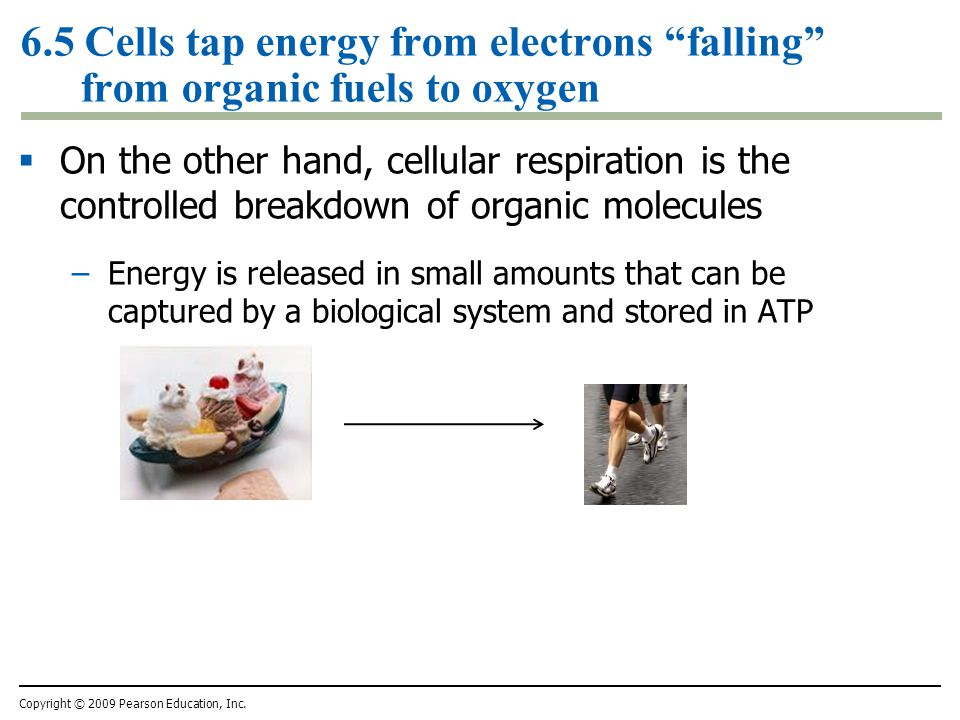 6.5 Cells tap energy from electrons falling from organic fuels to oxygen