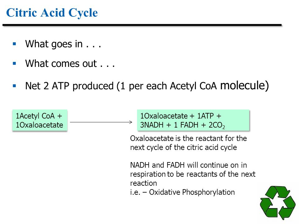 Citric Acid Cycle What goes in . . . What comes out . . .