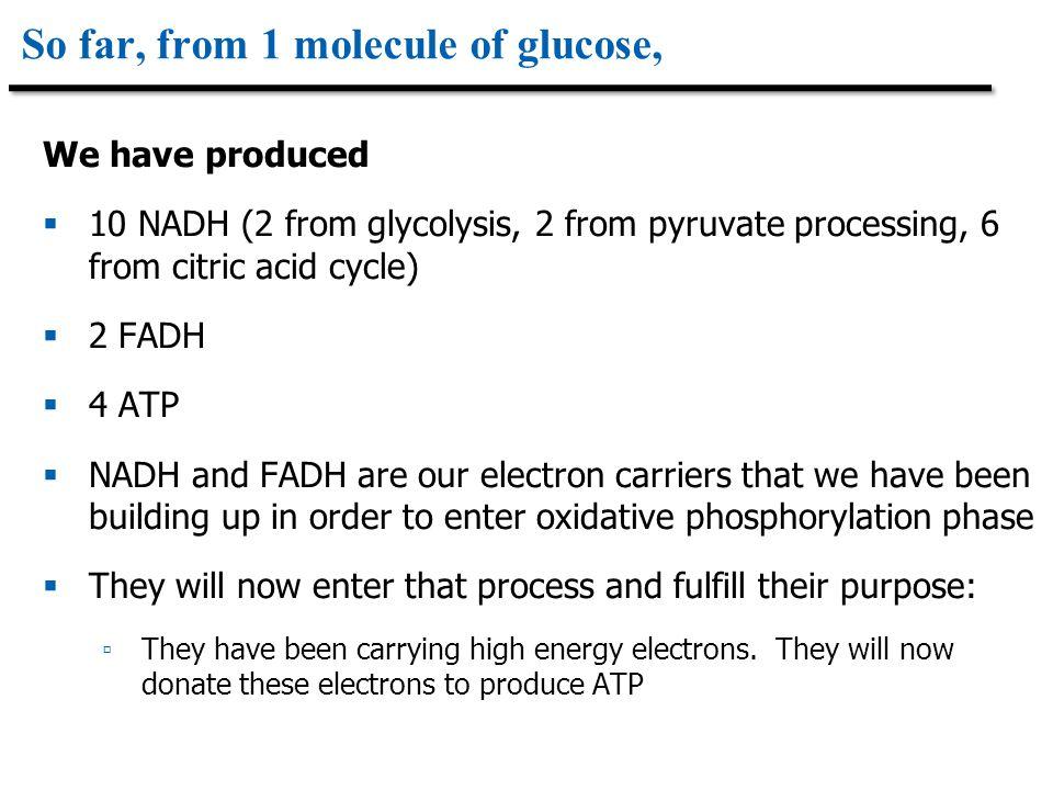 So far, from 1 molecule of glucose,