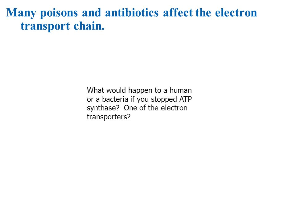 Many poisons and antibiotics affect the electron transport chain.