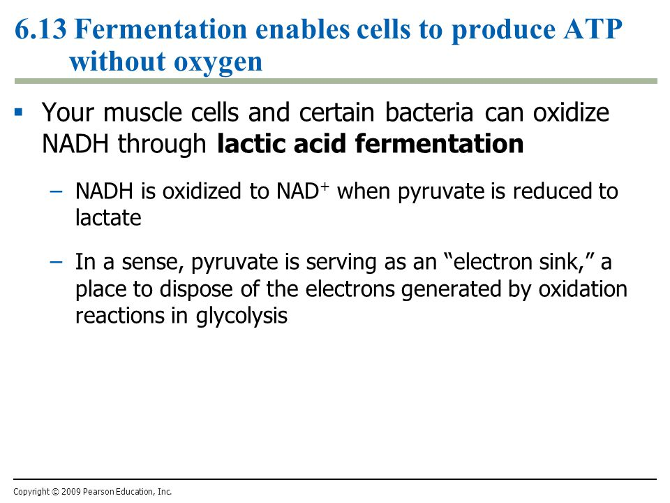 6.13 Fermentation enables cells to produce ATP without oxygen
