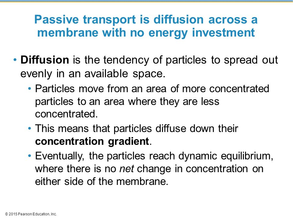 Passive transport is diffusion across a membrane with no energy investment