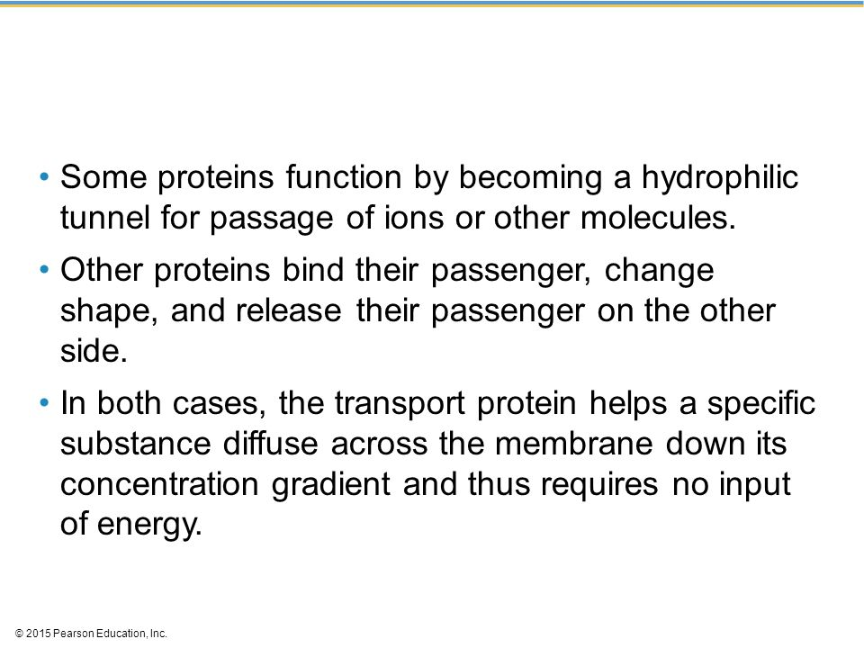 Some proteins function by becoming a hydrophilic tunnel for passage of ions or other molecules.