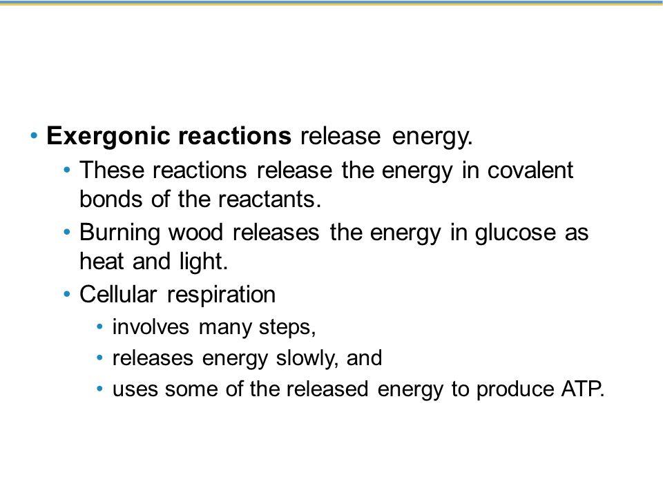 Exergonic reactions release energy.