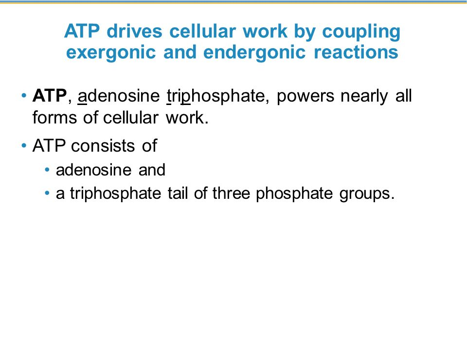 ATP drives cellular work by coupling exergonic and endergonic reactions