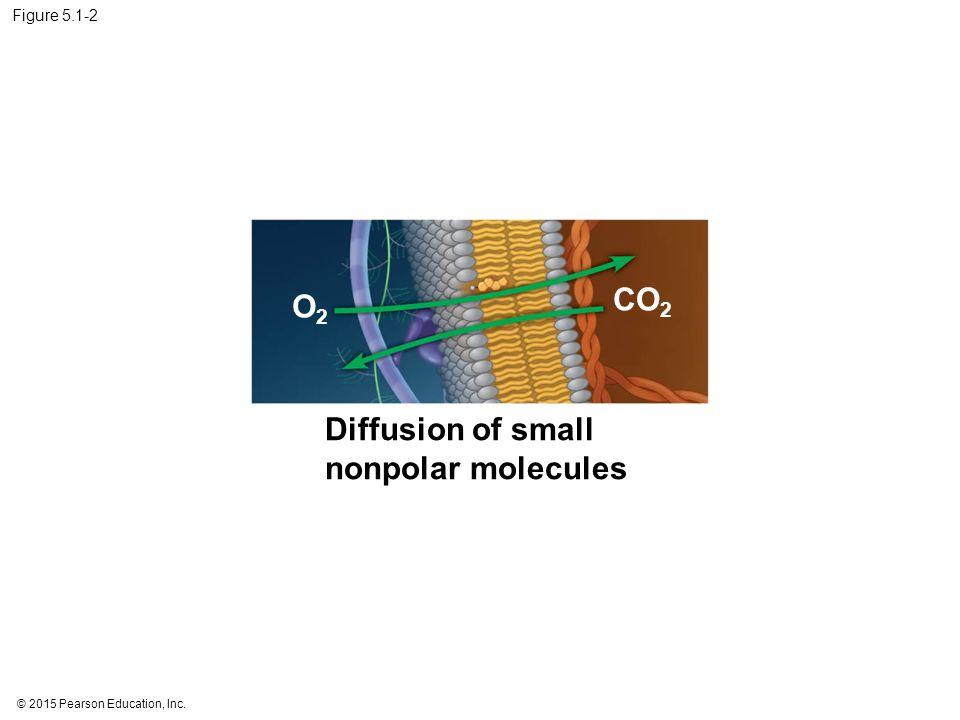 Diffusion of small nonpolar molecules