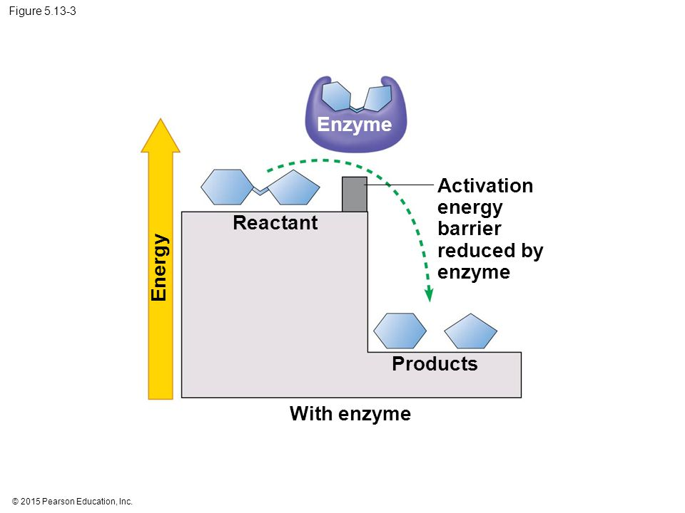 Activation energy barrier reduced by enzyme