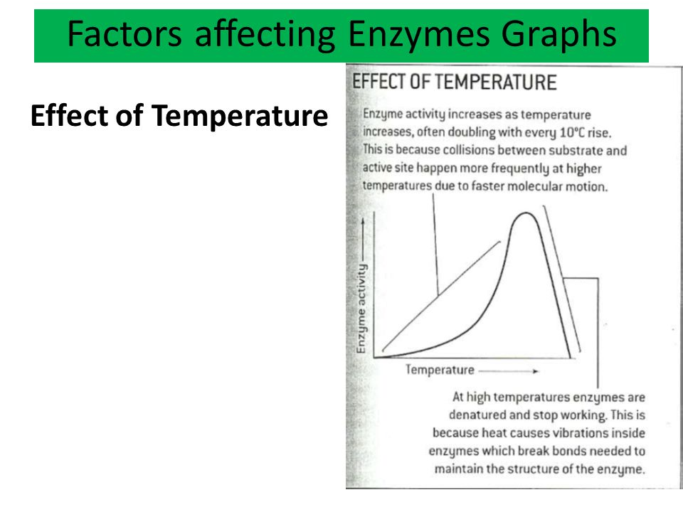 Factors affecting Enzymes Graphs