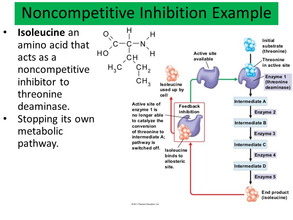 Noncompetitive Inhibition Example