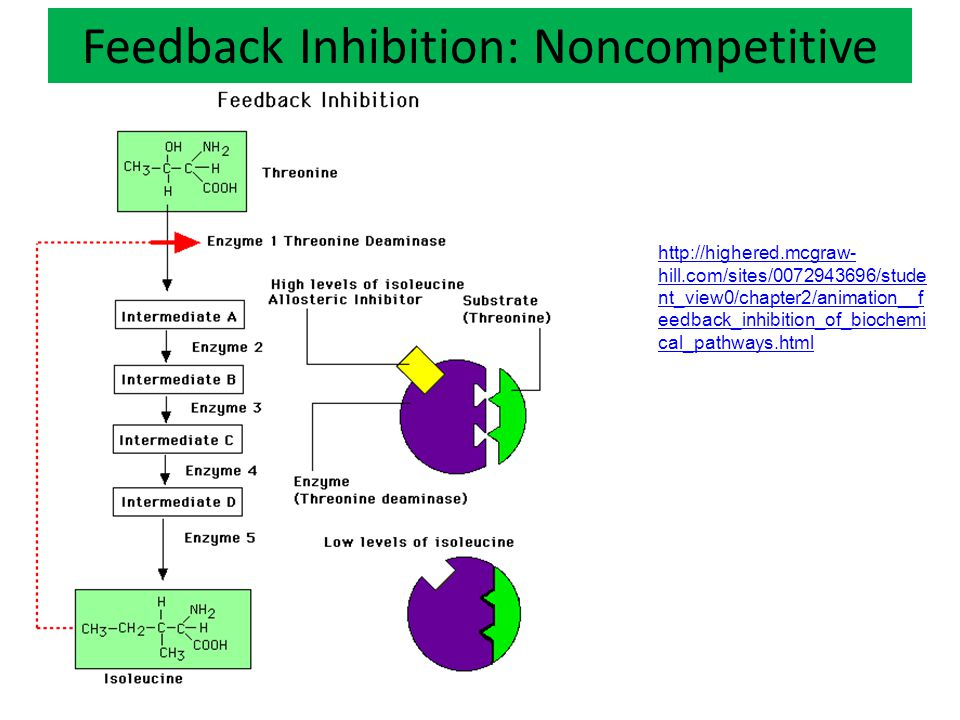 Feedback Inhibition: Noncompetitive