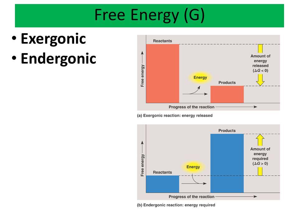 Free Energy (G) Exergonic Endergonic