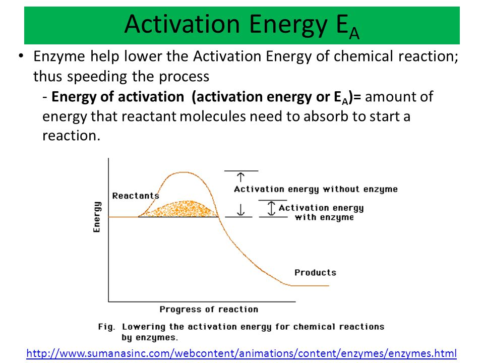 Activation Energy EA Enzyme help lower the Activation Energy of chemical reaction; thus speeding the process.