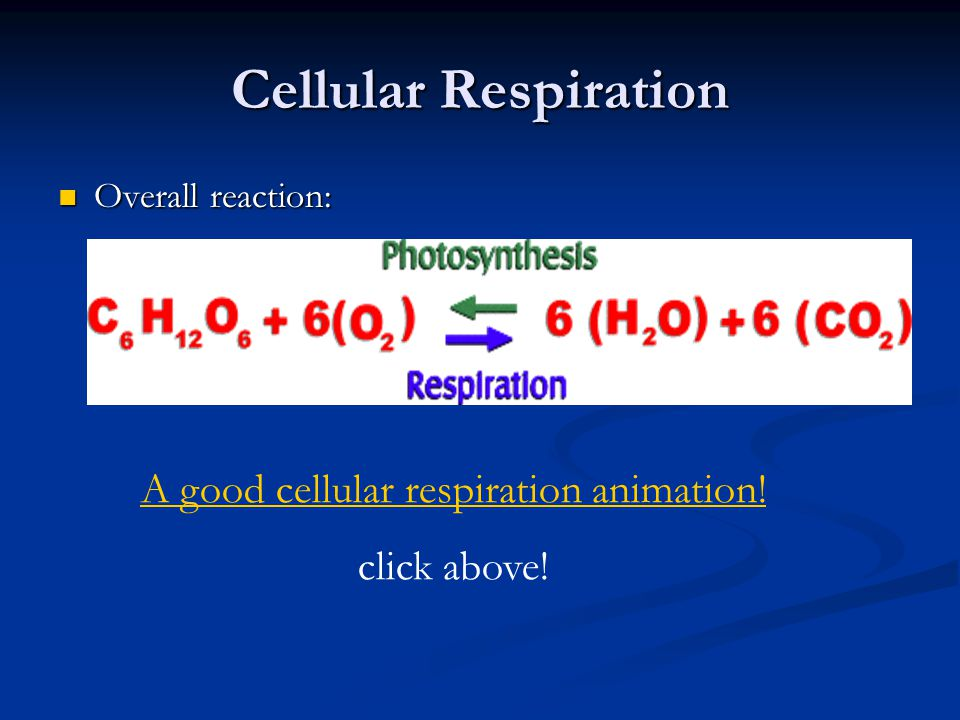 A good cellular respiration animation!