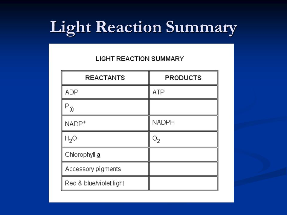 Light Reaction Summary