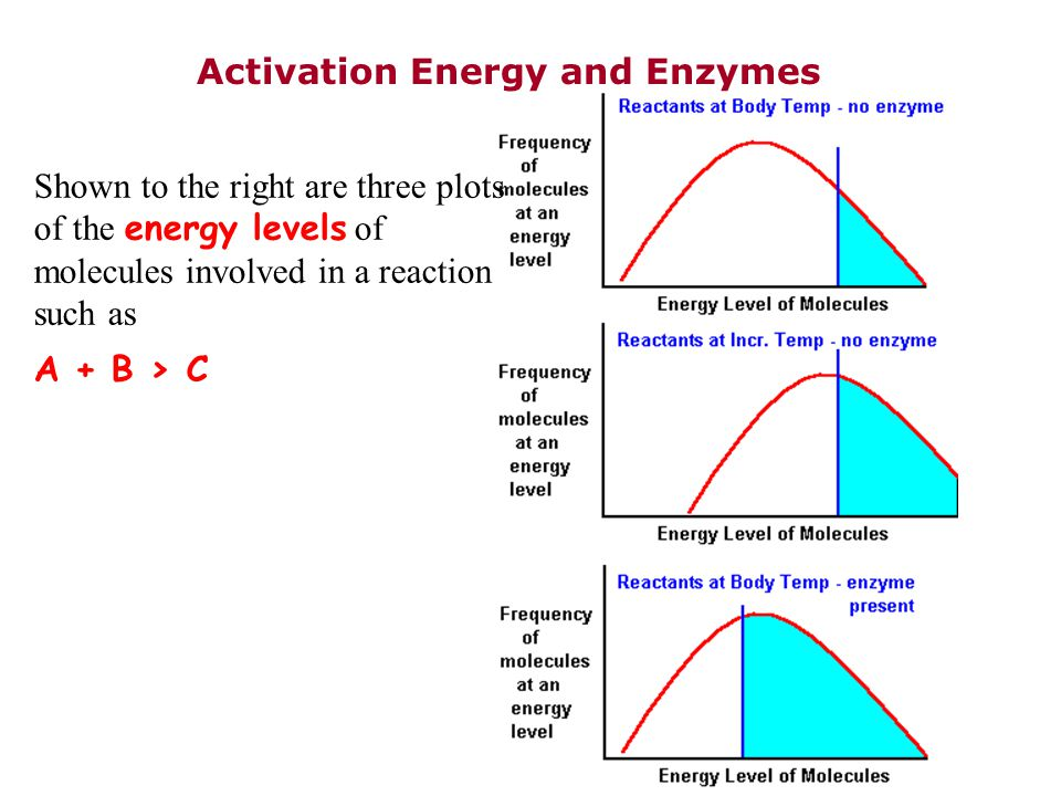 Activation Energy and Enzymes