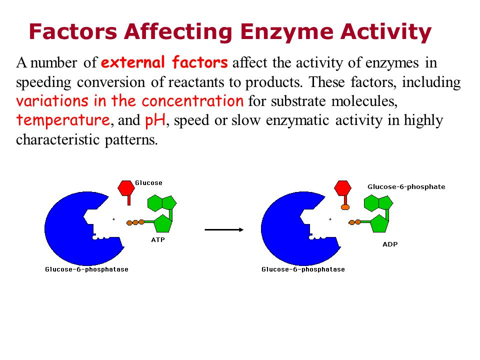 temperature affecting enzyme activity Temperature is 37oc and denaturation begins at a reaction time of 20 hours at  temperature of 55oc optimum ph of 45 was observed for best enzyme activity.