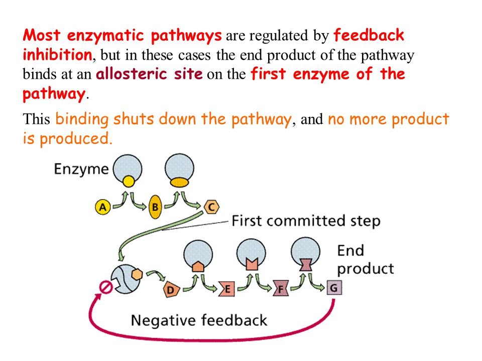 Most enzymatic pathways are regulated by feedback inhibition, but in these cases the end product of the pathway binds at an allosteric site on the first enzyme of the pathway.