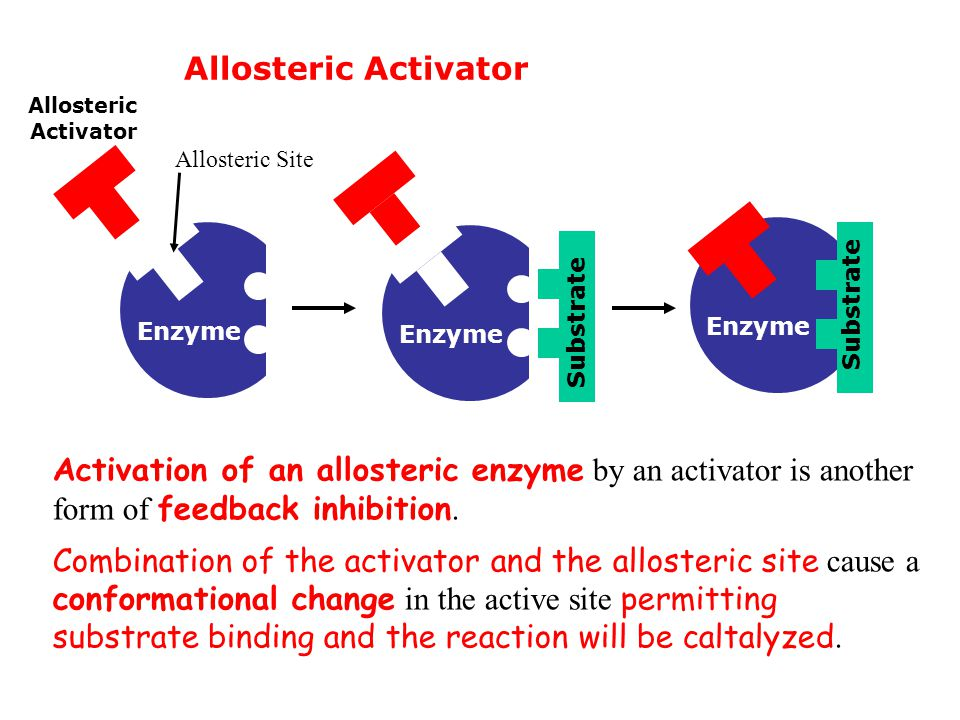 Allosteric Activator Substrate. Enzyme. Allosteric Site. Allosteric Activator.