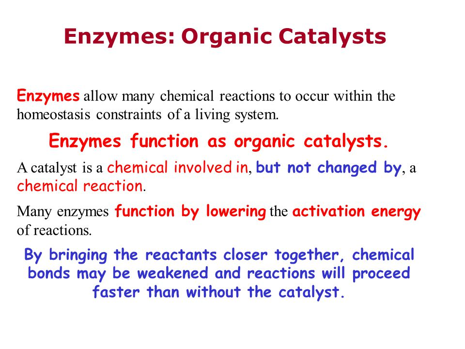 Enzymes function as organic catalysts.