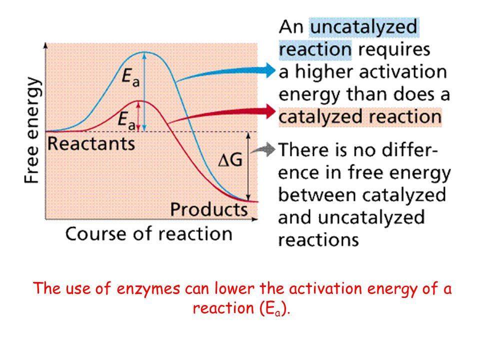 The use of enzymes can lower the activation energy of a reaction (Ea).