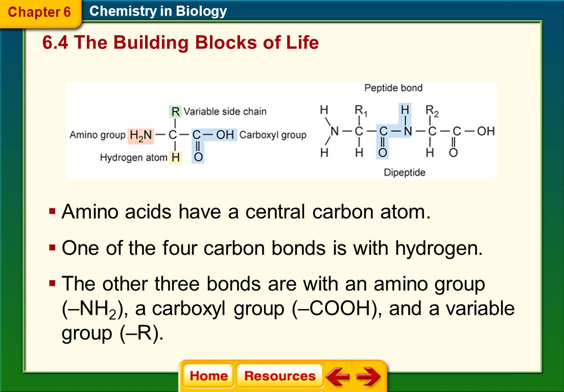 Amino acids have a central carbon atom.