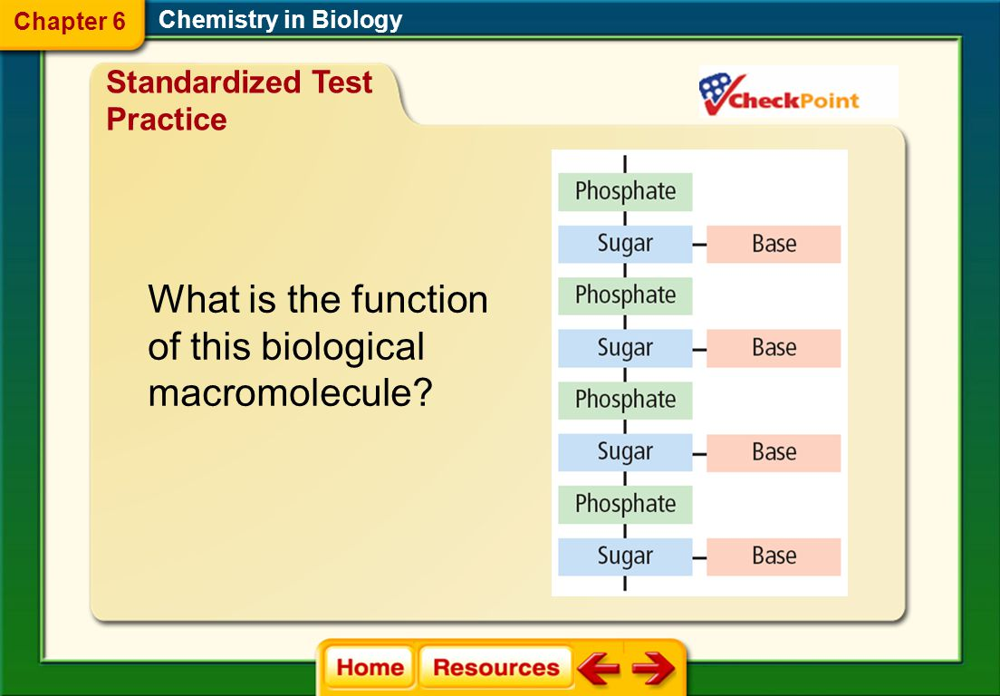 What is the function of this biological macromolecule