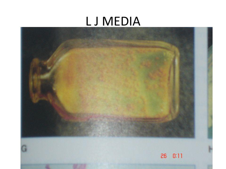 L J MEDIA