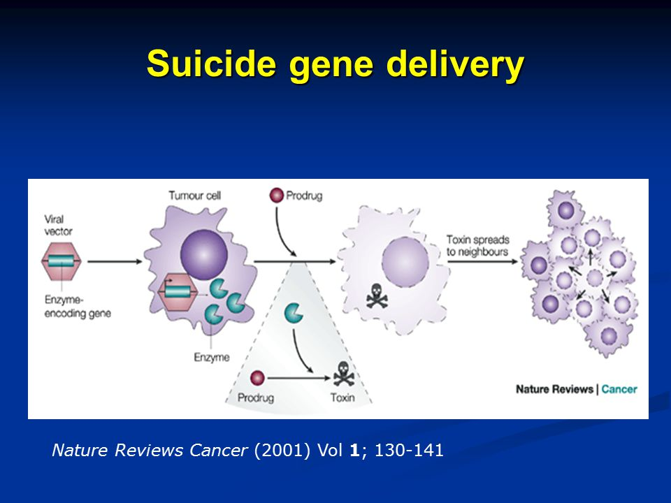 Suicide gene delivery Nature Reviews Cancer (2001) Vol 1; 130-141