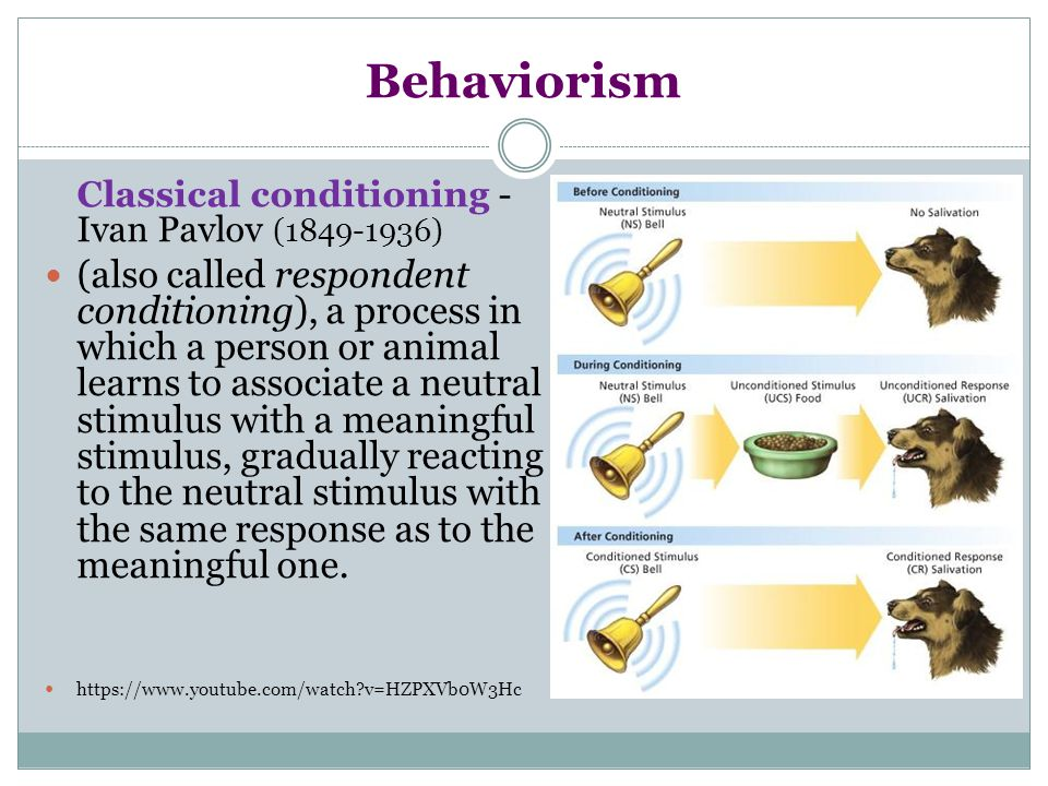 Behaviorism Classical conditioning - Ivan Pavlov (1849-1936)