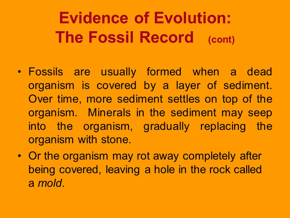 Evidence of Evolution: The Fossil Record (cont)