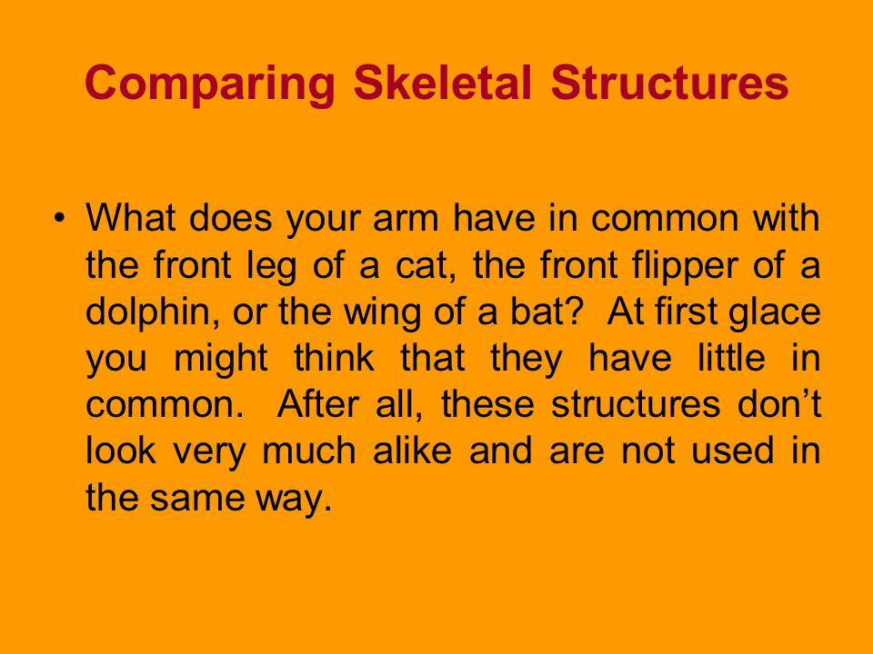 Comparing Skeletal Structures