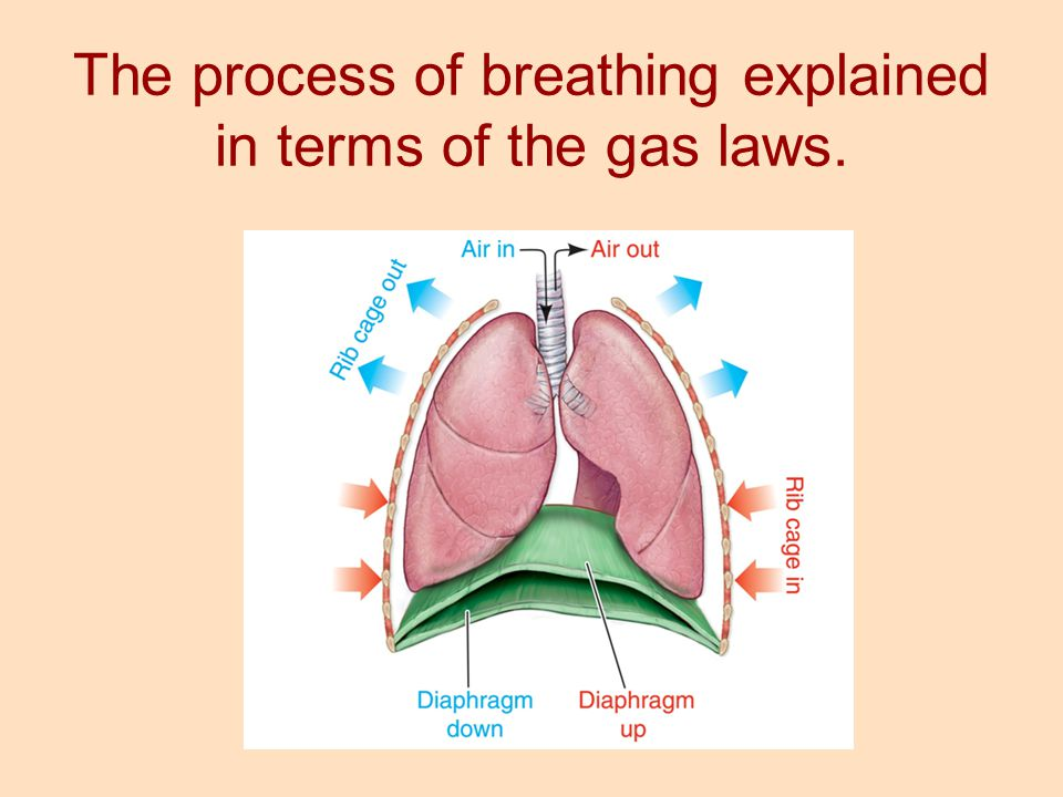 The process of breathing explained in terms of the gas laws.