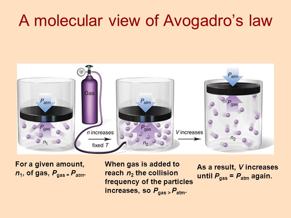 A molecular view of Avogadro's law