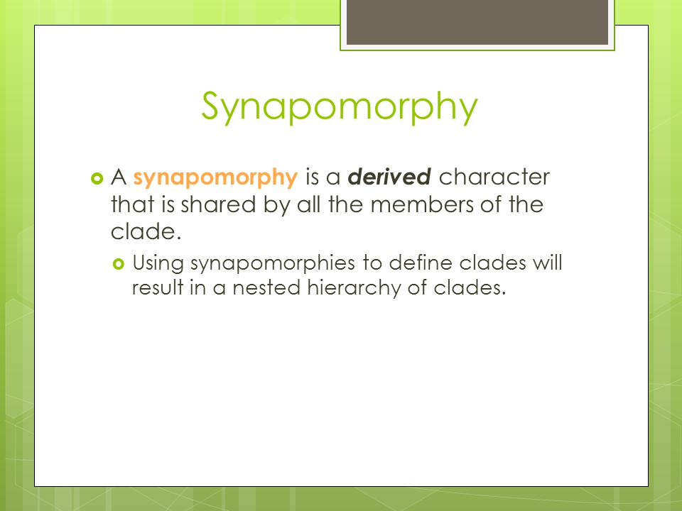 Synapomorphy A synapomorphy is a derived character that is shared by all the members of the clade.