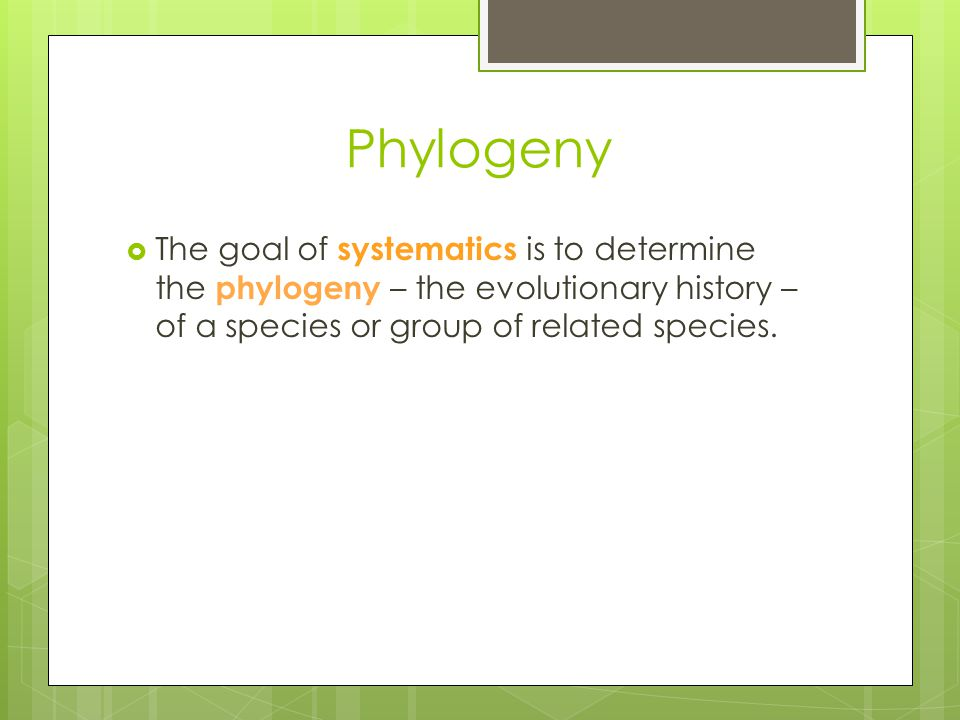 Phylogeny The goal of systematics is to determine the phylogeny – the evolutionary history – of a species or group of related species.