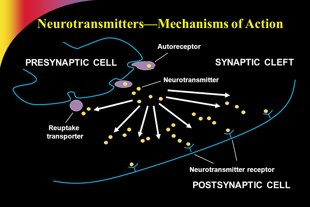 Neurotransmitters—Mechanisms of Action Neurotransmitter receptor