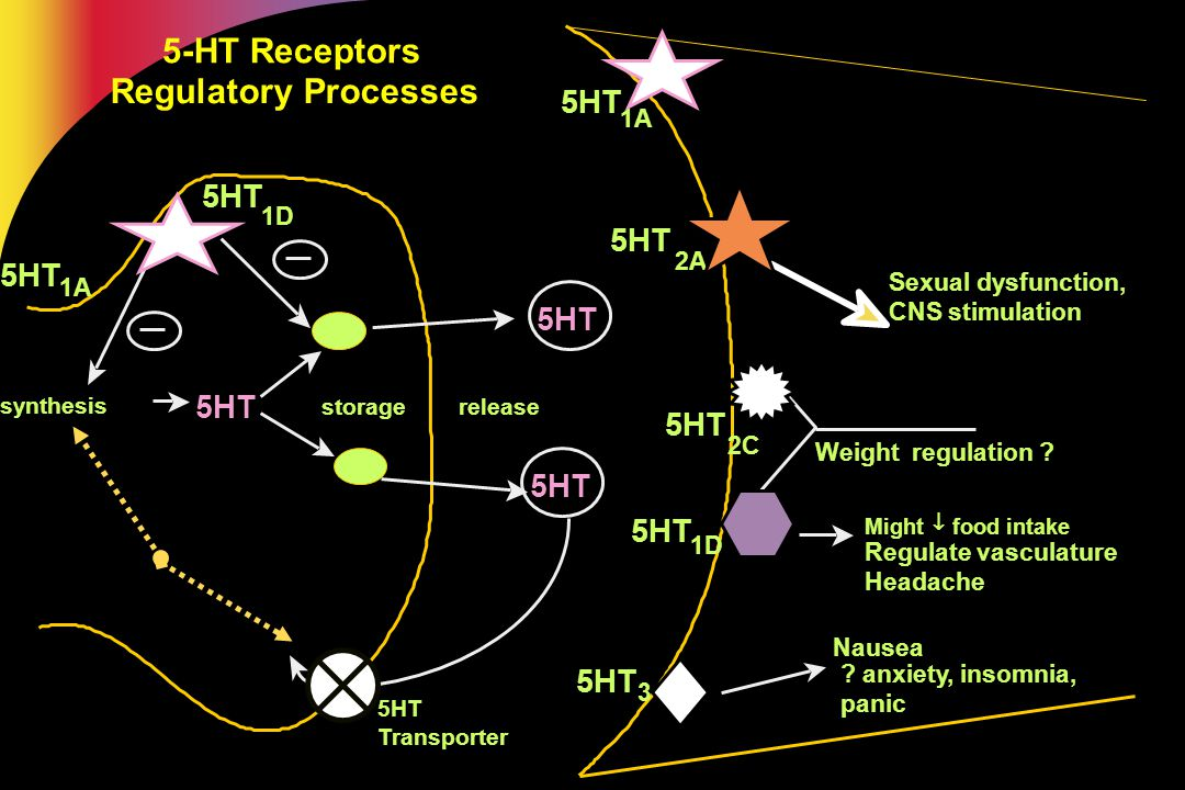 5-HT Receptors Regulatory Processes 5HT 5HT 5HT 5HT 5HT 5HT 5HT 5HT