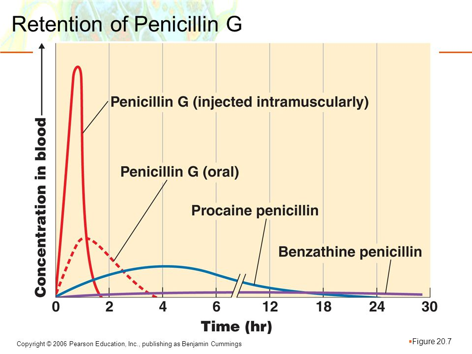 Retention of Penicillin G
