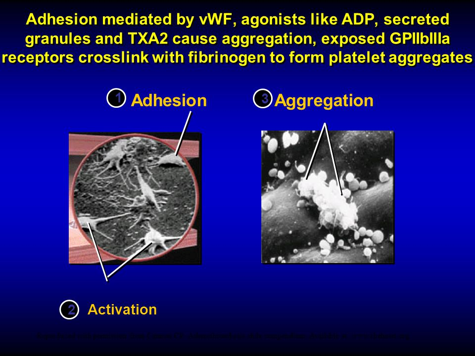 Adhesion mediated by vWF, agonists like ADP, secreted granules and TXA2 cause aggregation, exposed GPIIbIIIa receptors crosslink with fibrinogen to form platelet aggregates